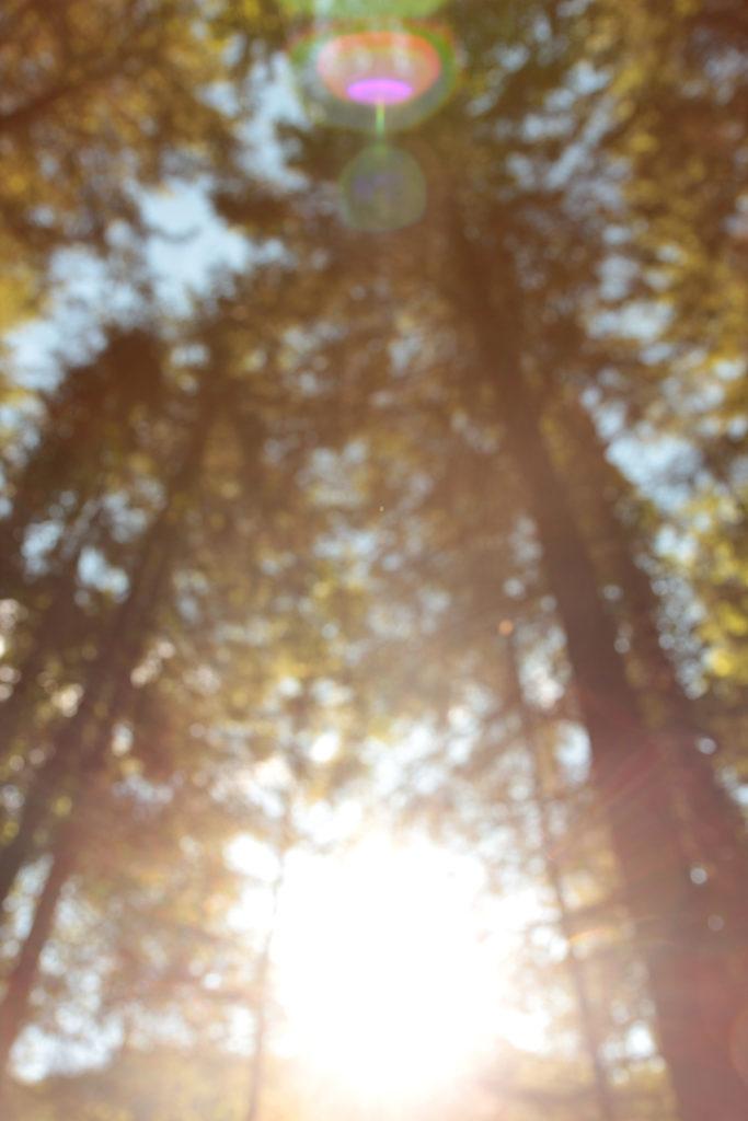 Photo de de forêt