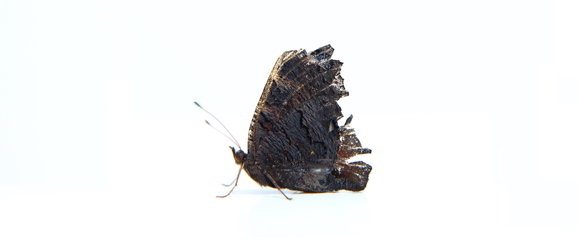 Photo d'un papillon
